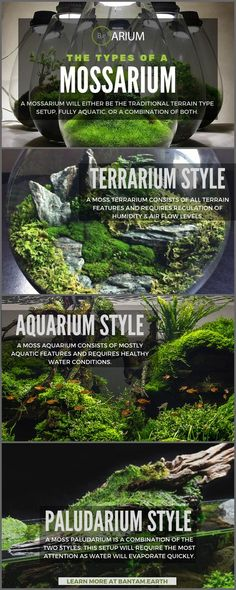 "Mossarium: Complete Care Guide & ""How To"" Build - moss terrarium DIY wedding Terrarium succulentes Terrarium Diy, Terrarium Wedding, Pokemon Terrarium, Aquariums, Types Of Moss, Floating Plants, Paludarium, Vivarium, Garden Types"
