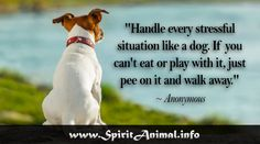 Handle every stressful situation like a dog .....