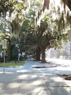 Just loved the Spanish Moss covered trees of Old Savannah!