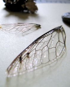 broken-wings by snappingtwig, via Flickr
