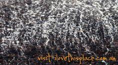 Nature painting mesmerises like a Jackson Pollock action canvas