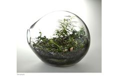 I love terrariums! I MUST have one someday. My beautiful aunt who died when I was 15 used to have one at her house and I was constantly there with my nose on the glass staring at it.
