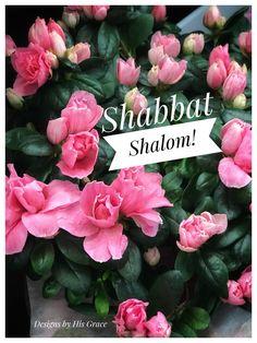 Shabbat Shalom 🕊 Loving the beautiful pink Azaleas from one of my clients. Jewish Shabbat, Shabbat Shalom, Happy Sabbath, Sabbath Day, Bon Sabbat, 4th Commandment, Sabbath Quotes, Good Shabbos, Shavua Tov