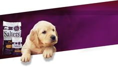Canine Puppy Food Puppy Food, Labrador Retriever, Puppies, Dogs, Animals, Labrador Retrievers, Cubs, Animales, Animaux