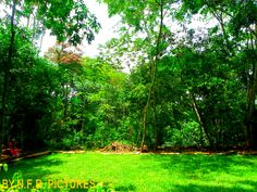 Réserve botanique de Nkol-Afamba // Centre-Cameroun