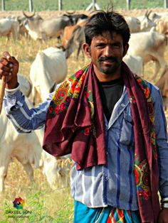 Good looking cowherd man from India