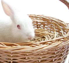 Bunny in the basket