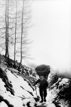 "Switzerland. Canton Graubunden. Viano. Poschiavo valley. Luigi Merlo carries hay on his back in a wood basket, called "" campache"". Winter season. Snow. Manual labor. Labour force.Swiss alpine farmers. Alps mountains peasants. © 1995 Didier Ruef"