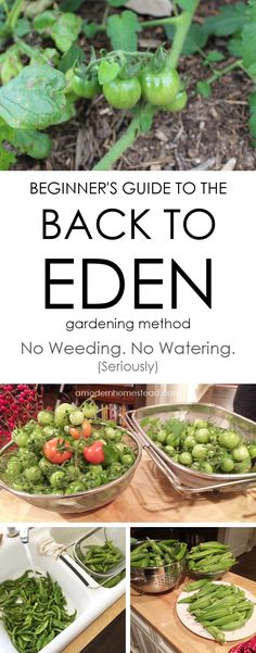 Getting started with the back to eden gardening method. How to start a back to eden garden bed. No weeding, no watering garden method that yields a lot of produce!