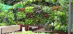 Growing vegetables on walls