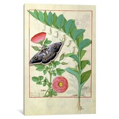 iCanvas Ms Fr. Fv VI #1 fol.118v Rose (Pink) and Polygonatum Gallery Wrapped Canvas Art Print by Robinet Testard