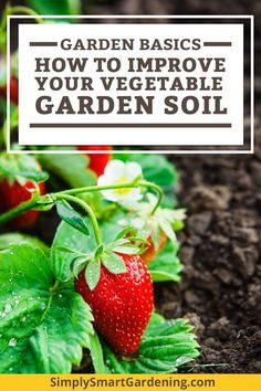 Get to know your vegetable garden soil and you can eliminate of your vegetable garden problems.