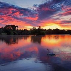 Sunrise at Petersfield Lake. Sun Moon Stars, Amazing Sunsets, Swan Lake, Wonders Of The World, Mother Nature, Beautiful Places, Sky, Explore, Photography