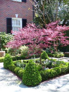 Red bud trees surrounded by boxwood hedge gives the front yard spring color and . - Red bud trees surrounded by boxwood hedge gives the front yard spring color and a formal landscape - Boxwood Landscaping, Boxwood Garden, Landscaping On A Hill, Boxwood Hedge, Landscaping Ideas, Landscaping Software, Herb Garden, Vegetable Garden, Formal Gardens