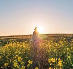 :))) Field of wild flowers