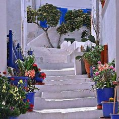 Naxos Island,  Cyclathes Greece