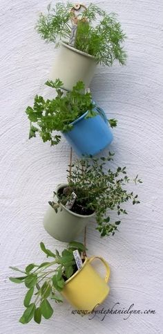 "herb hanging garden- make sure you put rocks or charcoal at the bottom of cups as they have poor drainage and can ""drown"" plants!"