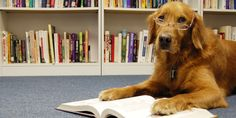 Reading Books To Shelter Dogs Makes The World Better For Everyone