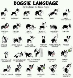 Doggie language translated for humans :P