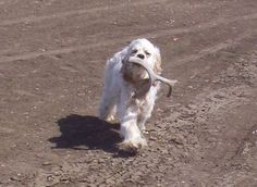 We want to train a dog to shed hunt someday.