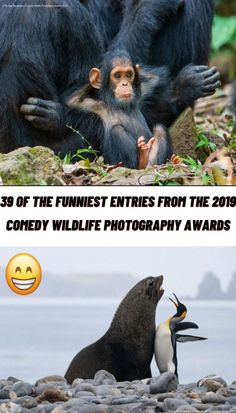 #Funniest #Entries #Comedy #Wildlife #Photography #Awards Comedy Wildlife Photography, Photography Awards, Photography Poses, Nature Photography, Mirror Photography, Funny Laugh, Funny Jokes, Funny Tweets, Hilarious