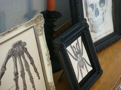 framed spider and creepy images
