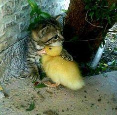 Look at these cute babies! kitten kittens kedi katze แมว 猫 ねこ ネコ 貓 고양이 Кот котэ котик кошка chat neko gato gatto meow kawaii nature pet animal instacat instapet mycat catlover Cute Little Animals, Cute Funny Animals, Cute Cats, Funny Dogs, Funny Fails, Crazy Animals, Kittens Cutest, Cats And Kittens, Kitty Cats