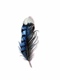 Blue jay feather