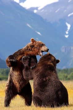 """creatures-alive: """"Brown Bears - Katmai - Alaska by Scott Cromwell) """" Nature Animals, Animals And Pets, Cute Animals, Wild Animals, Baby Animals, Baby Pandas, Beautiful Creatures, Animals Beautiful, Ours Grizzly"""