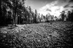 Aivan Lehmijärven kupeessa Varikattilanmäellä sijaitsee yksi alueen huomattavimmista muinaisrannoista. Noin hehtaarin kokoinen pyöristyneiden kivien muodostama pirunpelto kallion juurella on näyttävä. http://www.naejakoe.fi/luontojaulkoilu/varikattilanmaen-muinaisranta/