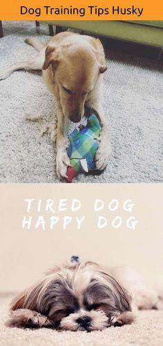 Dog Funny Breathing