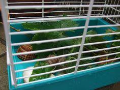 Fauna y flora doméstica: Cuidando a un caracol