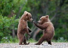 Too cute to be true! I love bears!
