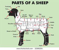 4H Parts of Sheep