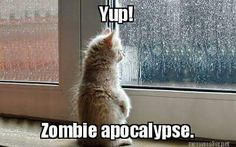 Apocalyptic cat. Via A. Silvestri.