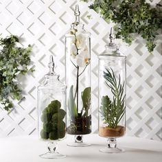 Chateau Tall Botanical Jars