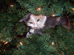 Christmas Trees Inspiration - ornaments rsrsrsrssss