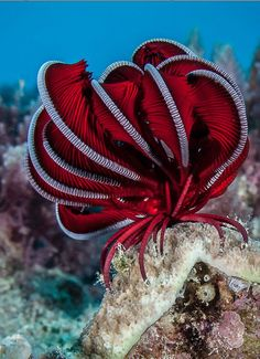 Feather starfish. Sea Creatures, Dusky's Wonders. www.duskyswondersite.com I'm…