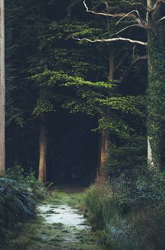 The woods...deep in the forest is where the magic begins...look! don't you see it? Look in the shadows...