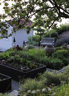 Black flowers in black stained raised bed garden ; Gardenista