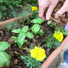 Herb container gardening tutorial (Lowe's)
