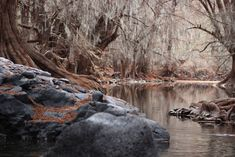 #environment #landscape #nature #outdoors #river #rocks #scenic #stream #trees #water