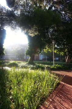 University of the Free State, #UfsToday- Bloemfontein Campus (Photo: Lelanie de Wet)
