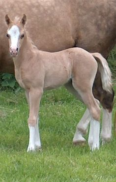 I am repinning this as much for the gorgeous dapples on the mare as for the adorable face of the foal