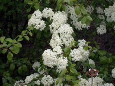 Native plants for Michigan landscape