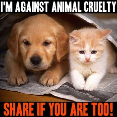 share if you are against animal cruelty!