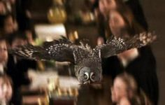 Errol (Harry Potter and the Chamber of Secrets) Harry Potter Journal, Harry Potter Owl, Harry Potter Hogwarts, Harry Potter Movie Characters, Book Characters, Strix Nebulosa, Funny Owls, Great Grey Owl, Harry Potter Aesthetic