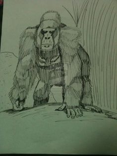 gorilla pen sketch by TeenWolf-78.deviantart.com on @deviantART