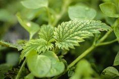Mantén tus cultivos fuertes, sanos y libres de químicos.