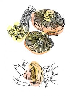 Hennie Haworth | Meiklejohn Cake Drawing, Illustrators, Dream Catcher, Rooster, Drawings, Artist, Reflection, Animals, Dreamcatchers